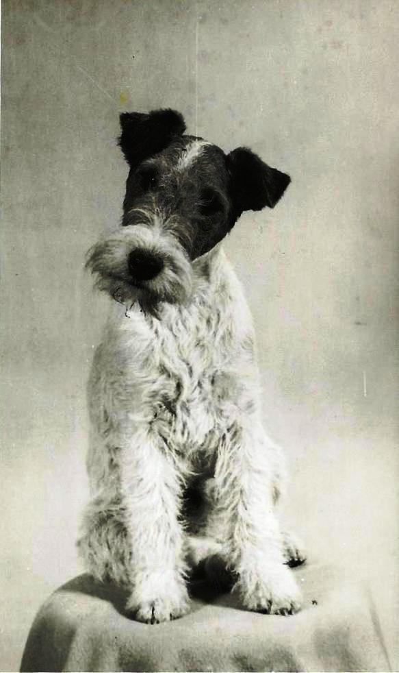 Charles Paine's dog 'Jenny'