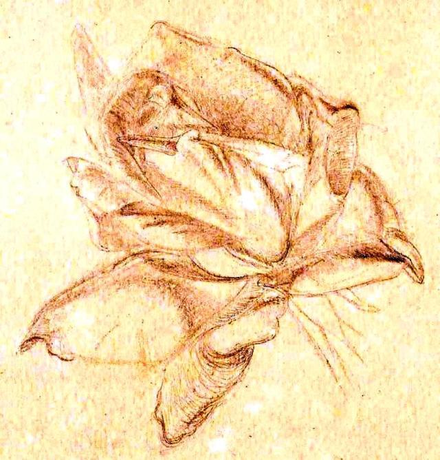 Paine Plant studies (1)