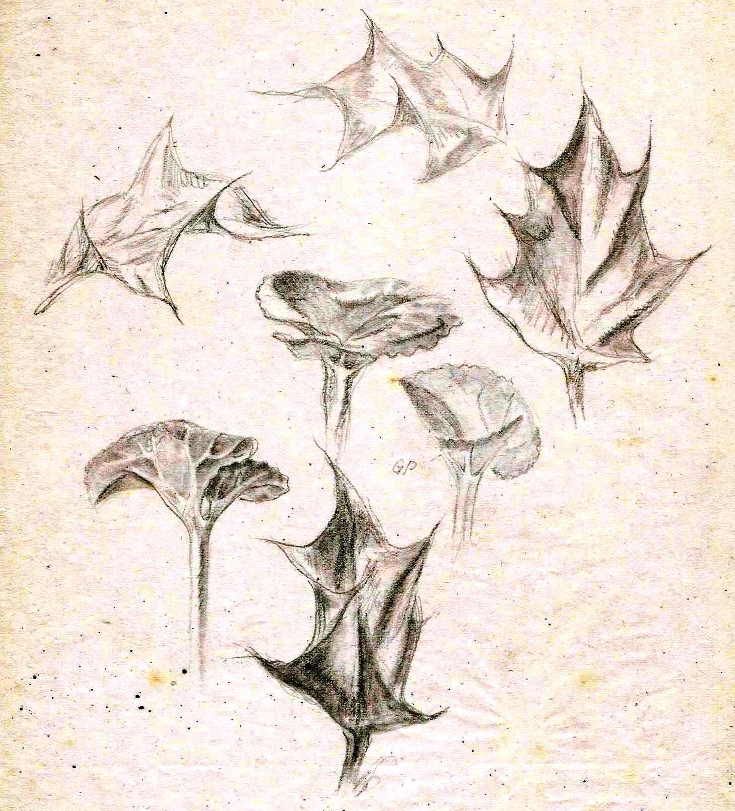 Paine Plant studies (2)