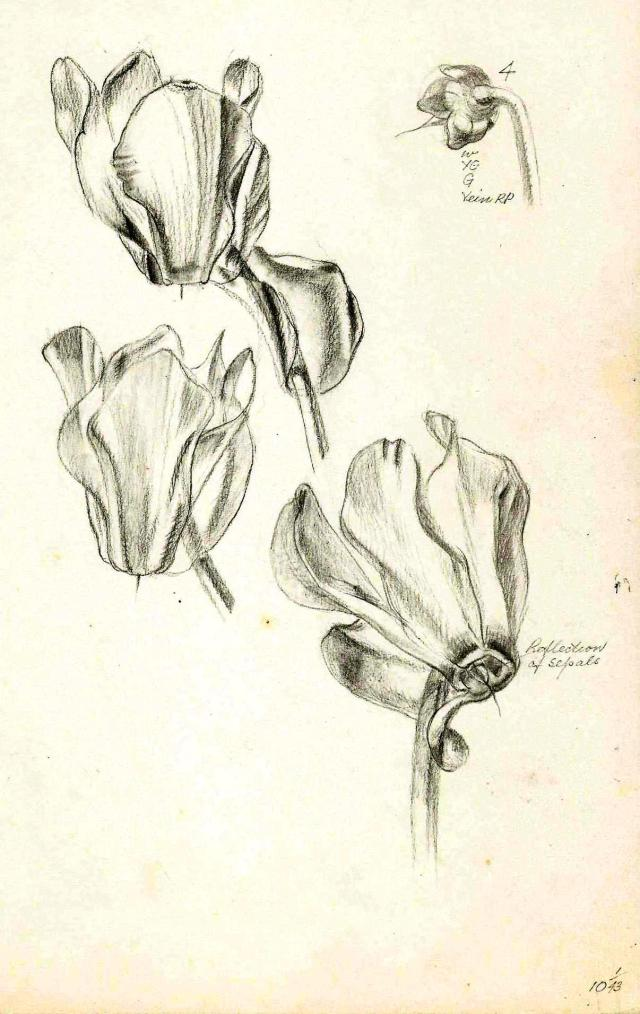 Paine Plant studies (3)