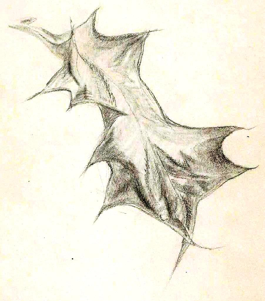 Paine Plant studies (4)