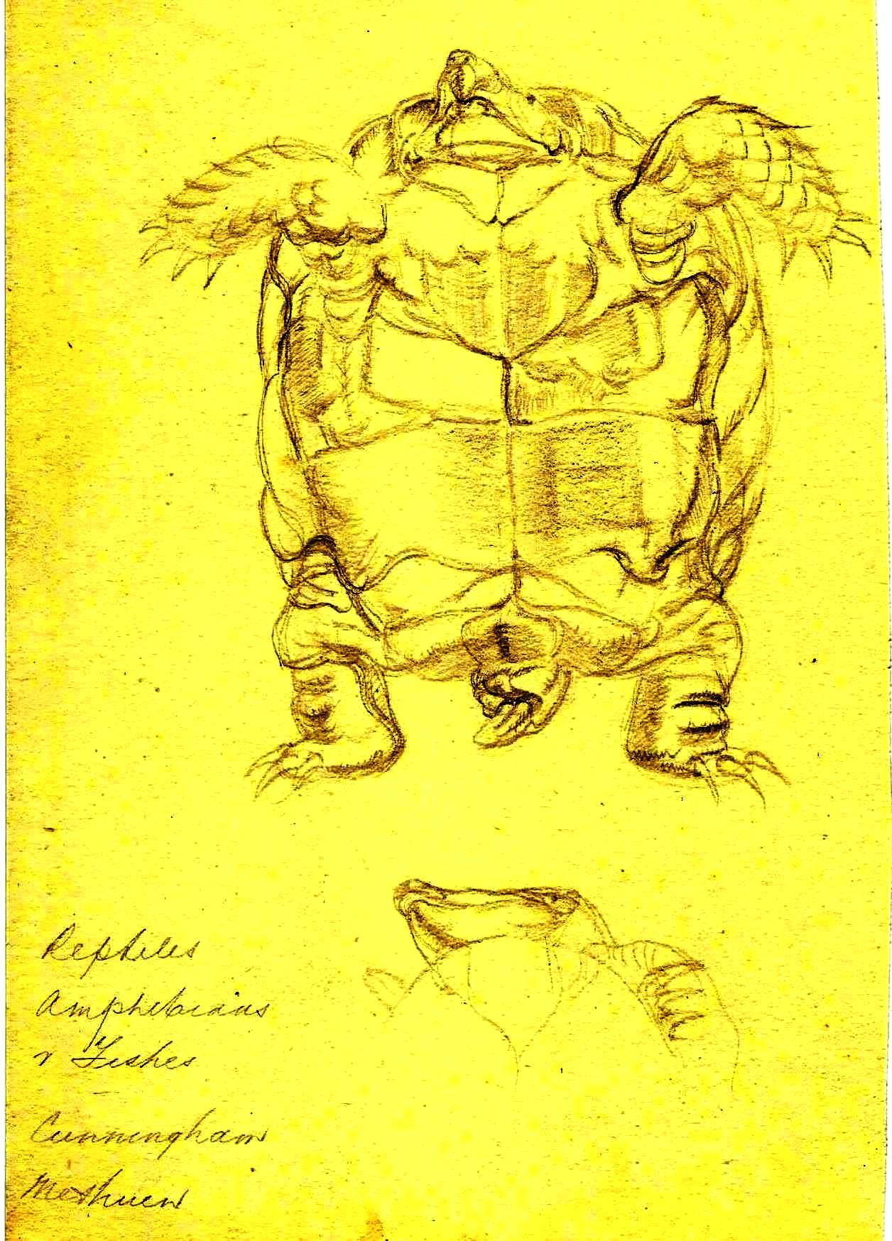 Turtle Paine